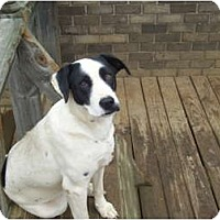 Shepherd (Unknown Type) Mix Dog for adoption in Remlap, Alabama - Patches