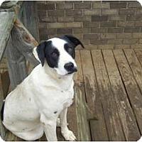 Shepherd (Unknown Type) Mix Dog for adoption in Hayden, Alabama - Patches