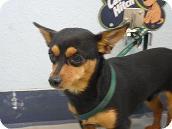 Dachshund Mix Dog for adoption in Fort Lupton, Colorado - Rocko