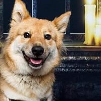 Adopt A Pet :: Roxanne - Baton Rouge, LA