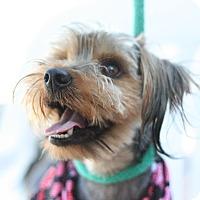 Adopt A Pet :: Bojangles - Canoga Park, CA