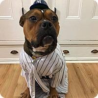 Adopt A Pet :: George - Parsippany, NJ