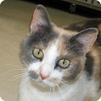 Adopt A Pet :: Angelina - Ruidoso, NM