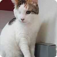 Adopt A Pet :: Sunshine - yuba city, CA