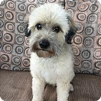 Adopt A Pet :: Cody - Los Angeles, CA