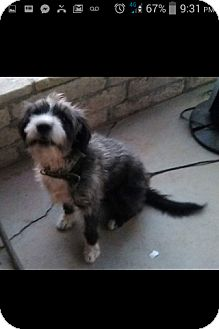 Terrier (Unknown Type, Medium) Mix Dog for adoption in Rosemead, California - Wallace