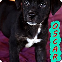 Adopt A Pet :: Oscar - tucson, AZ
