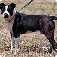 Adopt A Pet :: Ozzy - DeForest, WI