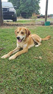 Adopt A Pet :: Clyde  - Mt Vernon, IN