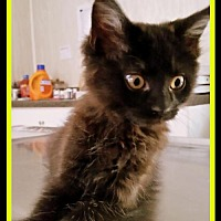 Adopt A Pet :: Casper - Berkeley Springs, WV