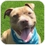Photo 1 - Pit Bull Terrier Dog for adoption in San Diego, California - Amy
