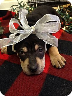 Hound (Unknown Type) Mix Puppy for adoption in Waldorf, Maryland - Sprinkles