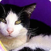 Adopt A Pet :: Sephora - Tucson, AZ