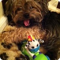 Adopt A Pet :: Sofia Rose - Omaha, NE