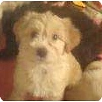 Adopt A Pet :: Sarah Ferguson - Phoenix, AZ