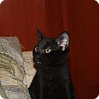 Adopt A Pet :: Lincoln (LE) - Little Falls, NJ