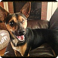 Adopt A Pet :: Odie - Hagerstown, MD