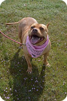 Pit Bull Terrier Mix Dog for adoption in Aurora, Colorado - Kali