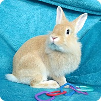 Adopt A Pet :: Sunny - Los Angeles, CA