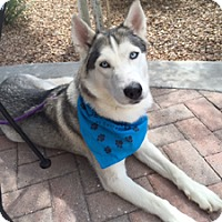 Adopt A Pet :: Ocean - Santa Fe, NM