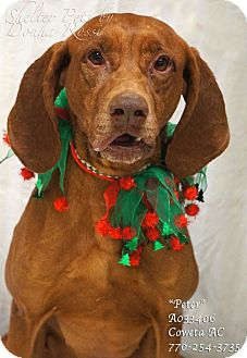 Redbone Coonhound Mix Dog for adoption in Newnan City, Georgia - Peter