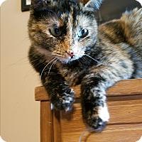 Domestic Shorthair Cat for adoption in Marietta, Georgia - Tallulah