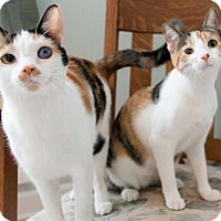 Adopt A Pet :: Essie and Oona - Chicago, IL