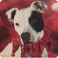 Adopt A Pet :: Wiggles~COURTESY POST~ - Columbus, OH