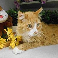Adopt A Pet :: GEORGE - Fairfield, CA