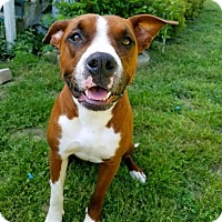 Adopt A Pet :: Roxie - Harrisonburg, VA