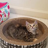 Adopt A Pet :: Maxine - Columbus, OH