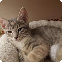 Adopt A Pet :: Jelly - Raritan, NJ