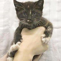 Adopt A Pet :: Cheryl - Santa Paula, CA