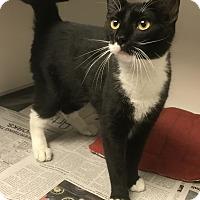 Adopt A Pet :: Gerald - Newport, NC