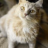 Adopt A Pet :: Tabitha - Knoxville, TN
