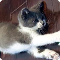 Adopt A Pet :: Rohan - Mississauga, Ontario, ON