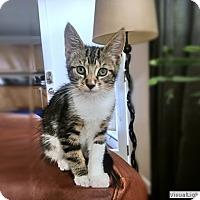 Adopt A Pet :: Miss Augusta - Westchester, CA