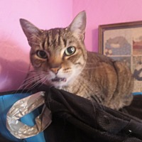 Adopt A Pet :: Lady - Coos Bay, OR