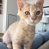 Adopt A Pet :: Remy - Toronto, ON