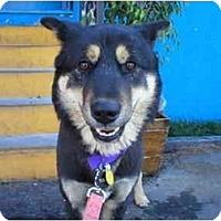 Adopt A Pet :: Bob - Chimayo, NM