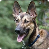 Adopt A Pet :: Buji - Toronto/Etobicoke/GTA, ON