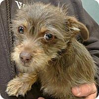 Adopt A Pet :: Sprout - white settlment, TX