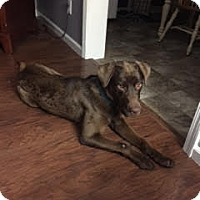 Adopt A Pet :: Max - Lewisville, IN