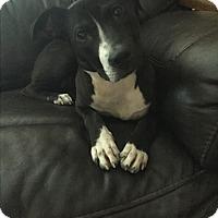 Adopt A Pet :: Rory - Hamburg, PA
