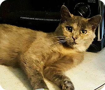Domestic Shorthair Cat for adoption in Roscoe, New York - Charlie Rose