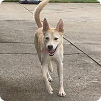 Adopt A Pet :: Izzy - Dayton, OH