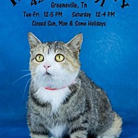 Adopt A Pet :: Twix - Greeneville, TN