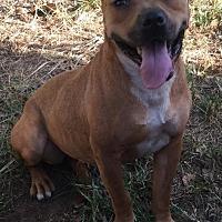 Adopt A Pet :: Hopper $50 - Guthrie, OK