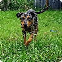 Adopt A Pet :: Logan - TX - Warren, ME
