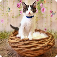 Adopt A Pet :: Chandler - Sterling Heights, MI